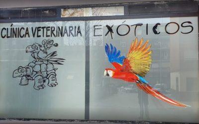 Clínica Veterinaria Exoticos