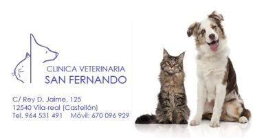 Clínica Veterinaria San Fernando